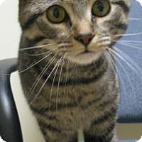 Adopt A Pet :: Fee - Gary, IN