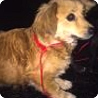 Adopt A Pet :: Cassie - Thousand Oaks, CA