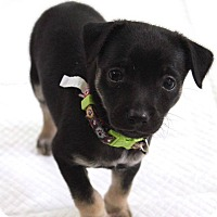 Adopt A Pet :: LOU - Adoption Pending - Hurricane, UT