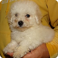 Adopt A Pet :: TEDDY - Wheeling, WV