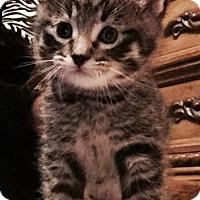 Adopt A Pet :: Logan - Hurst, TX