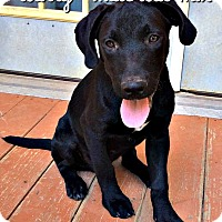 Adopt A Pet :: Larry - Bonham, TX