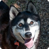 Adopt A Pet :: ALLIE-Needs Foster Home! - Boise, ID