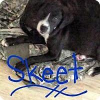 Adopt A Pet :: Skeet - Walker, LA