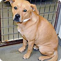 Adopt A Pet :: Sativa aka Stella - San Jacinto, CA