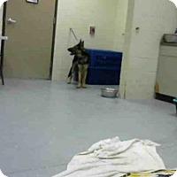 Adopt A Pet :: GAL - Conroe, TX