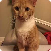 Adopt A Pet :: Sunshine - Chicago, IL