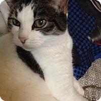Adopt A Pet :: Precious - Wasilla, AK
