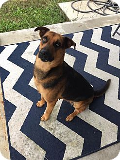 German Shepherd Dog Dog for adoption in New Braunfels, Texas - Princess