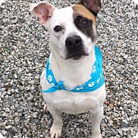 Adopt A Pet :: King - Greensboro, NC