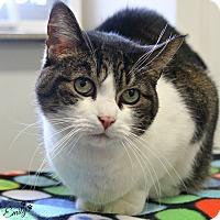 Adopt A Pet :: Emily - Dunkirk, NY