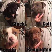 Adopt A Pet :: 4 cute puppies - South San Francisco, CA