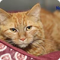 Adopt A Pet :: Nacho - Baton Rouge, LA
