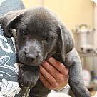 Adopt A Pet :: Cherry Vanilla~adopted!