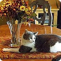 Adopt A Pet :: Lucky Louie - Harrisburg, NC