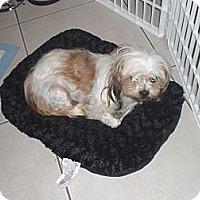 Adopt A Pet :: Delila - Rescue, CA