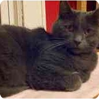 Adopt A Pet :: Elvis - Manalapan, NJ