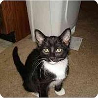 Adopt A Pet :: abby - Chandler, AZ