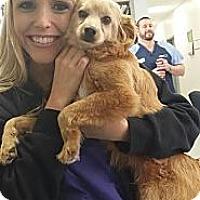 Adopt A Pet :: Wilson - Encinitas, CA