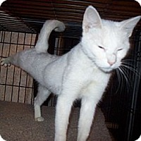 Adopt A Pet :: Crystal - Wakinsville, GA