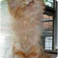 Adopt A Pet :: Mac - Strathmore, AB