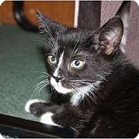 Adopt A Pet :: Tyney - Little Falls, NJ