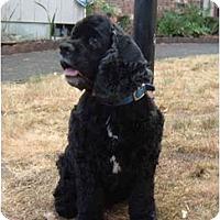 Adopt A Pet :: Princess - Tacoma, WA