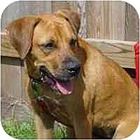 Adopt A Pet :: Annie - Carencro, LA