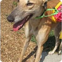 Adopt A Pet :: Runaway Rosalie - Canadensis, PA