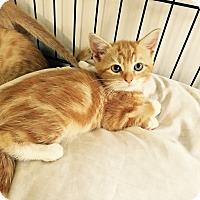 Adopt A Pet :: Trudy - Speonk, NY