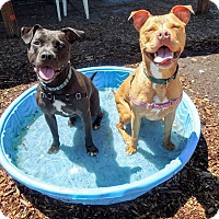 Adopt A Pet :: MYA and JADE - Portland, OR
