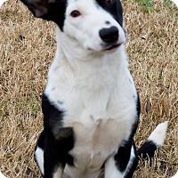 Adopt A Pet :: Maria - Patterson, CA