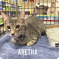 Adopt A Pet :: Aretha - Arlington/Ft Worth, TX