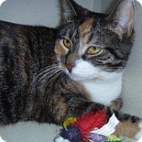 Adopt A Pet :: Faye - Hamburg, NY