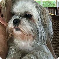 Adopt A Pet :: Smooch and Joey - Ocean Ridge, FL
