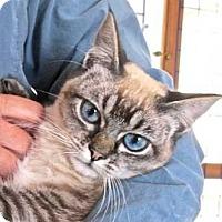 Adopt A Pet :: Hannah - Davis, CA