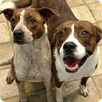 Adopt A Pet :: Bruce and Brenda - Hagerstown, MD