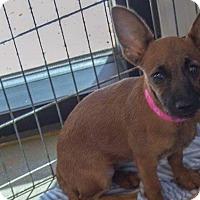 Adopt A Pet :: Lane - Phoenix, AZ