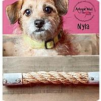 Adopt A Pet :: Nyla - Weston, FL