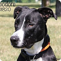 Adopt A Pet :: Theodore - Troy, MI