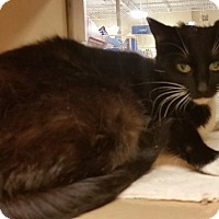 Adopt A Pet :: Zarah - North Haven, CT