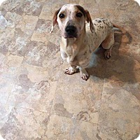 Adopt A Pet :: Ozzy - Crosbyton, TX