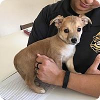 Adopt A Pet :: 5486 - Calhoun, GA