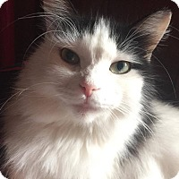 Adopt A Pet :: Isabella - Davison, MI