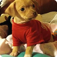 Adopt A Pet :: Colby - Austin, TX