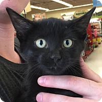 Adopt A Pet :: Joker - Meridian, ID