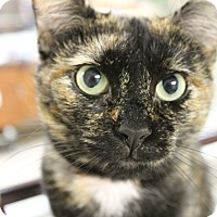 Adopt A Pet :: Marie - Medina, OH
