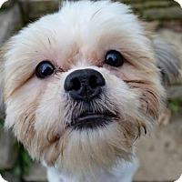 Adopt A Pet :: Cuddles - Pittsburgh, PA