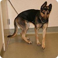Adopt A Pet :: Darlene - Wildomar, CA