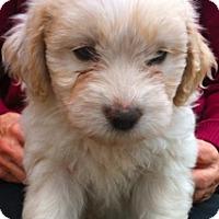 Adopt A Pet :: Destiny - Simi Valley, CA